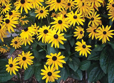 fiori gialli maggio