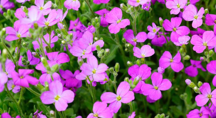 Fiori Viola Immagini.Fiori Viola Tavolozza Della Natura Fai Da Te In Giardino