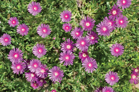 Impariamo le nozioni essenziali per coltivare dei magnifici fiori ...