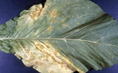 malattie-fungine