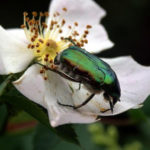 Parassiti animali: difendiamo le piante