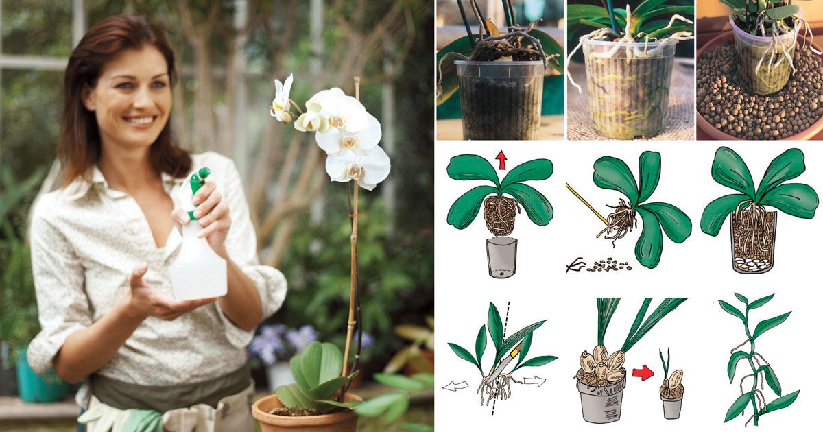 Orchidea 36 Cose Fondamentali Da Sapere Fai Da Te In Giardino