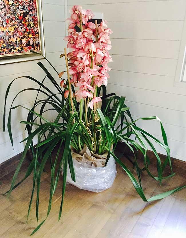 Orchidea cura in casa best orchidea rami in vaso di vetro for Orchidee in casa