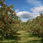 Coltivazione biologica   L'esempio del Trentino Alto Adige