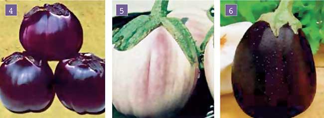 melanzane tonde