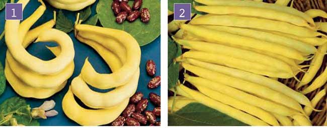 fagiolini gialli