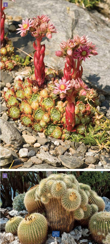 Giardino roccioso come progettare al meglio un rock for Piccoli giardini rocciosi
