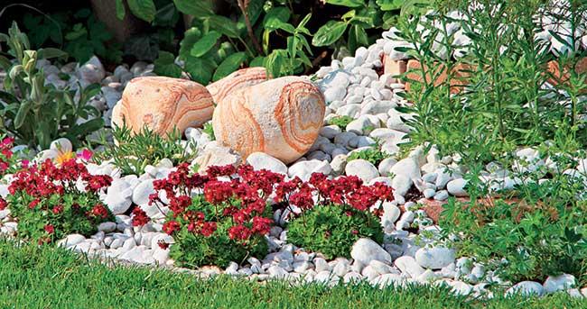 Giardino roccioso come progettare al meglio un rock for Giardino roccioso