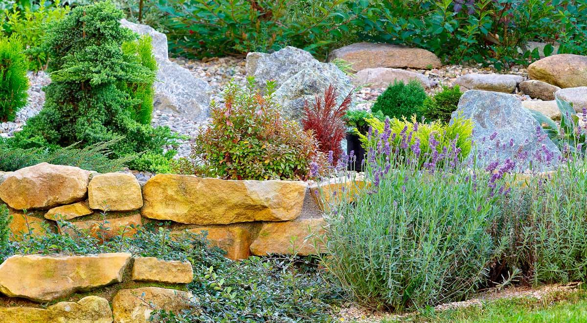 Piante Grasse Da Giardino giardino roccioso | come progettare al meglio un rock garden