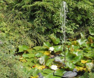 piante acquatiche