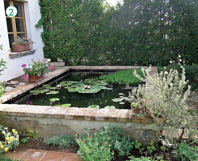 Piante acquatiche come sceglierle piantarle e curarle for Vasca per stagno