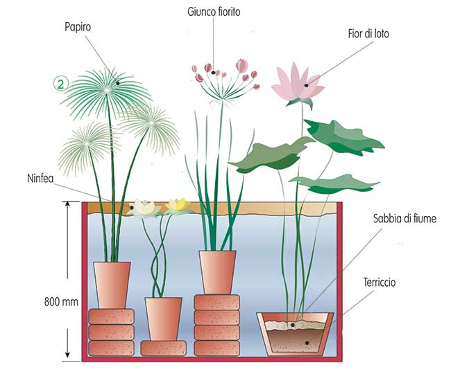Piante acquatiche come sceglierle piantarle e curarle for Piante da laghetto