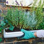Giardino verticale fai da te in 6 mosse! | Guida passo-passo