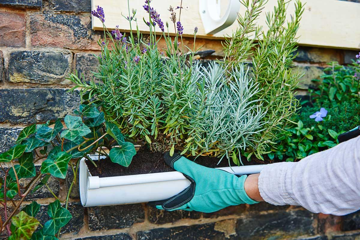 Giardino verticale fai da te in 6 mosse guida passo passo for Decorazione giardino fai da te