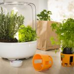 Miniserre per giardinaggio urbano | Come coltivare le aromatiche