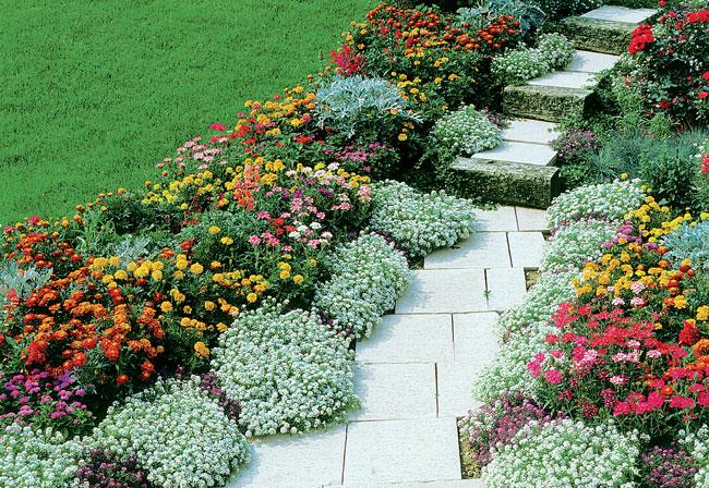 Piante ornamentali perenni idea creativa della casa e for Piante verdi perenni da giardino