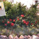 Aiuole fiorite fai da te | 11 passaggi fondamentali per non sbagliare