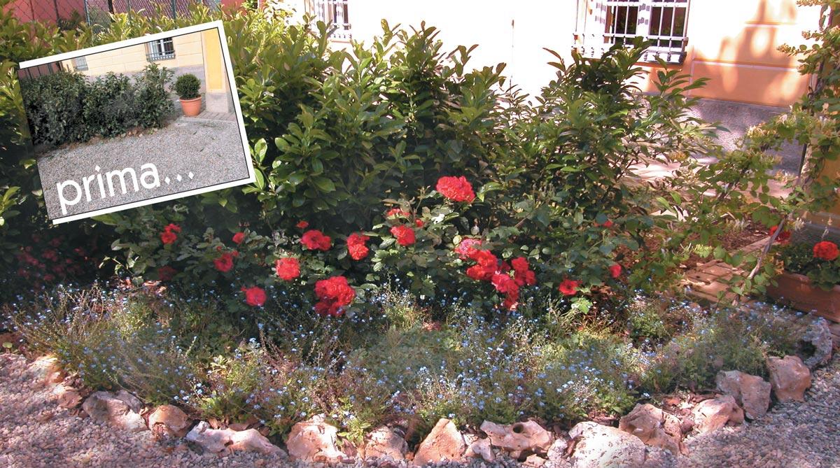 Aiuole fiorite fai da te 11 passaggi fondamentali per for Bordi per aiuole fai da te