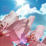 Fiori che resistono al sole per balcone, terrazzo e giardino | Consigli