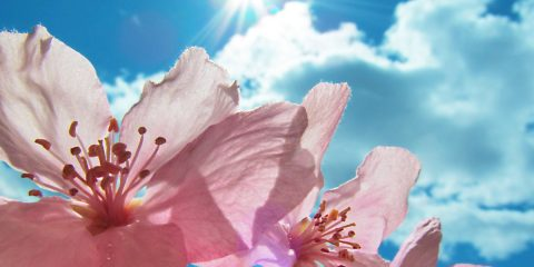 fiori che resistono al sole