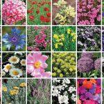 Piante perenni | 34 varietà per bordura, giardino, balcone e vaso