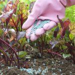 Fertilizzare | Come utilizzare i concimi naturali e sintetici