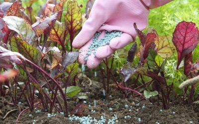 fertilizzare