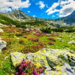 Piante alpine   Panoramica delle più diffuse