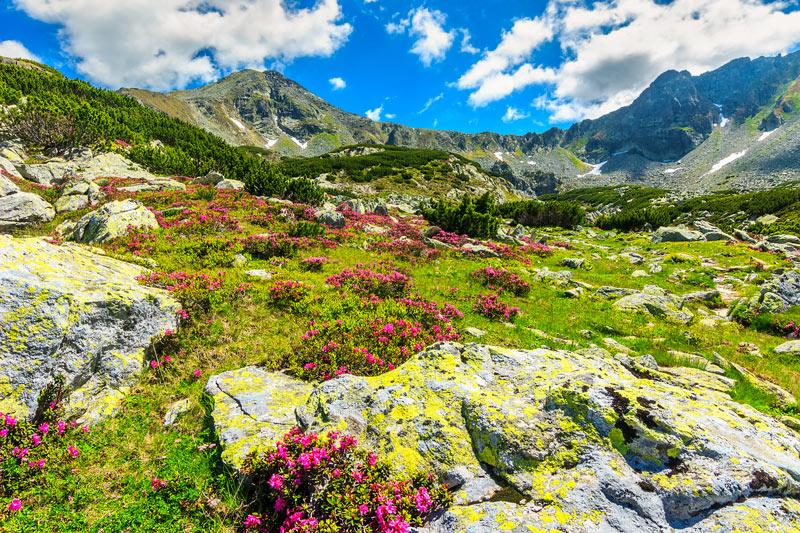 piante alpine
