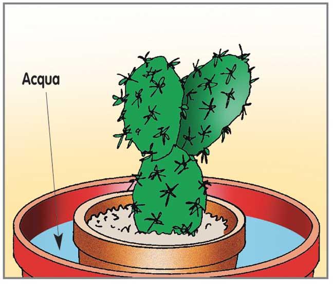 irrigazione pianta grassa