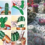 Piante grasse con fiori | Coltivazione, rinvaso e talea