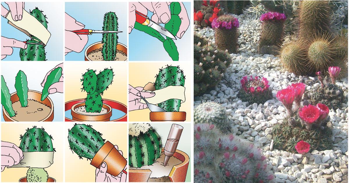 Piante Grasse Con Fiori Gialli.Piante Grasse Con Fiori Coltivazione Rinvaso E Talea Fai Da