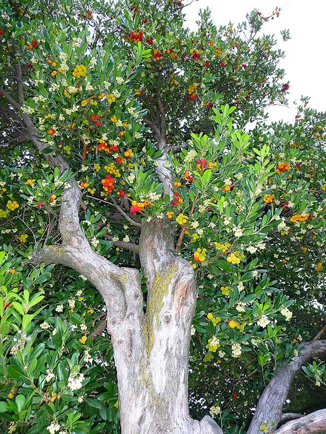 Alberi da giardino piccolo beautiful alberi ornamentali - Albero sempreverde da giardino ...