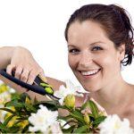 Potatura verde e cimatura delle piante | Perché si fanno e come eseguirle