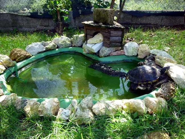 Tartarughe d 39 acqua dolce guida alle specie habitat for Laghetto artificiale per tartarughe