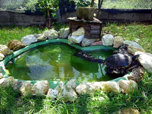 Tartarughe d 39 acqua dolce guida alle specie habitat for Vasche da interrare per tartarughe
