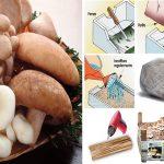 Coltivare funghi in casa in cassetta, in sacco e nel legno