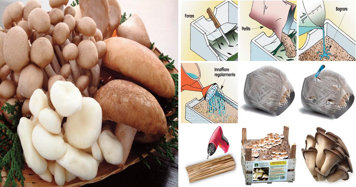 Coltivare funghi in casa