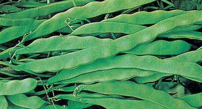 Cosa piantare a settembre nell 39 orto fai da te in giardino for Cosa piantare nell orto adesso
