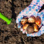 Come conservare i bulbi | Tutti i passaggi
