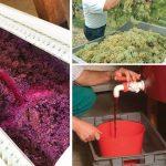 Come si fa il vino in casa | Pigiatura, fermentazione, follatura