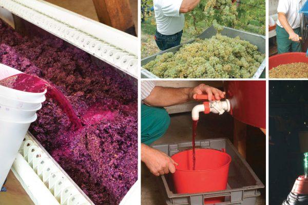 come si fa il vino in casa