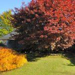 Giardini in autunno | Colori e piante