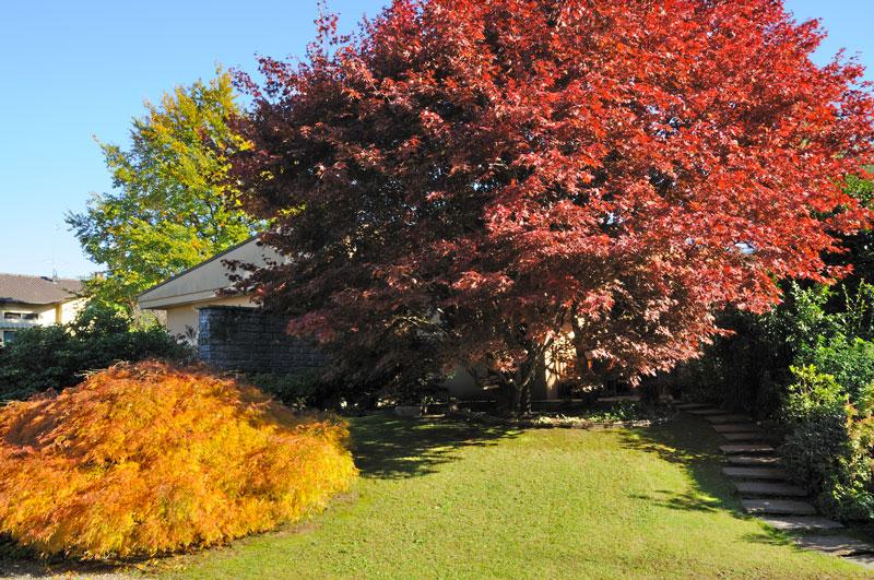 giardini in autunno