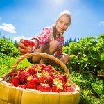 Riproduzione fragole per stolone | Come si fa
