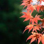 Acero | Varietà e coltivazione