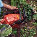 Abbattere un albero | La tecnica passo a passo