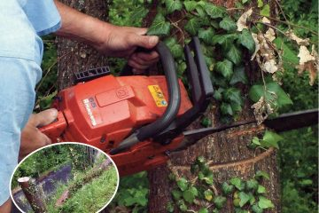 come abbattere un albero