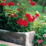 Fioriere in cemento | Un vaso fai da te per il giardino