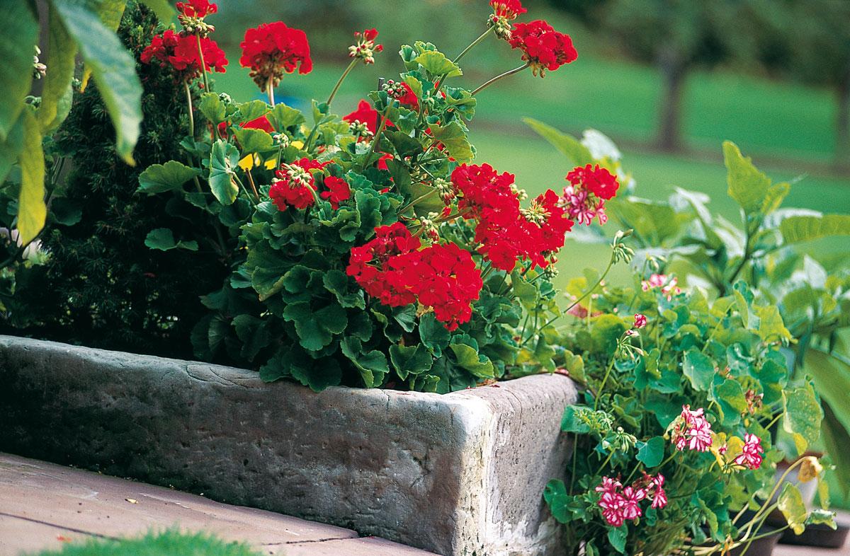 Fioriere In Cemento Un Vaso Fai Da Te Per Il Giardino